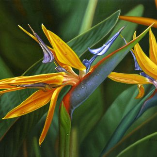 EE Bright Paradise, bird of paradise painting