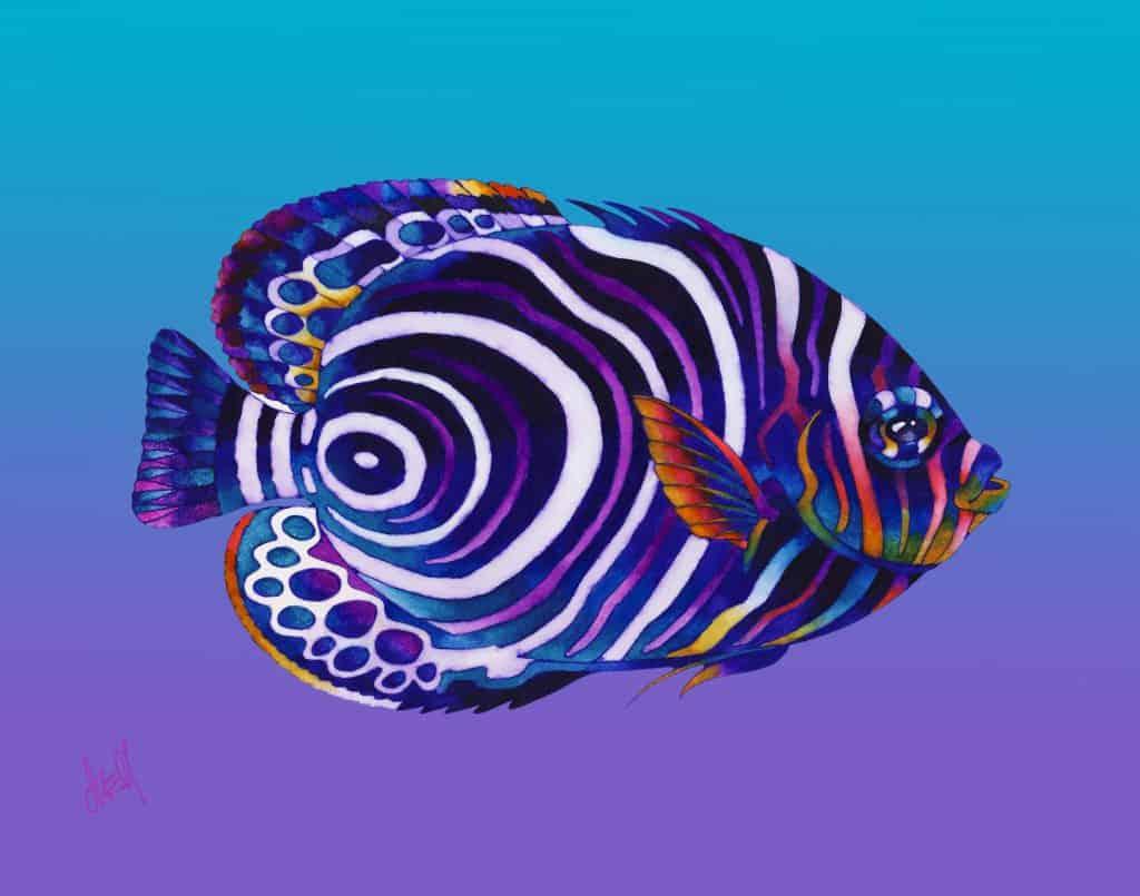 Emperor Juvenile Angelfish